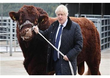 """ملكة بريطانيا تشريعاً يمنع """"جونسون"""" 733709092019092927.jpg"""